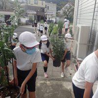 保護中: 三連休中の台風に備えて「菊の避難」