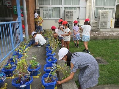 命をつなぐ植物の営み